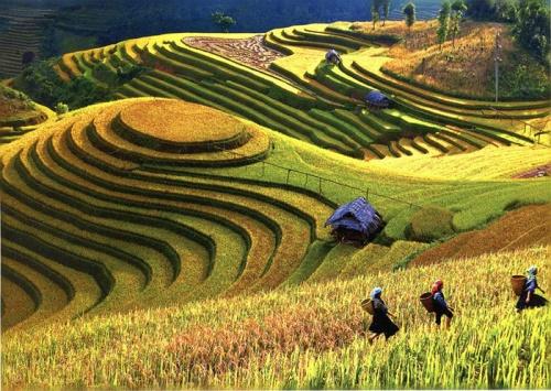 vietnam terrace
