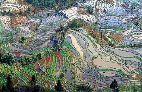 Yuanyang-rice-fields